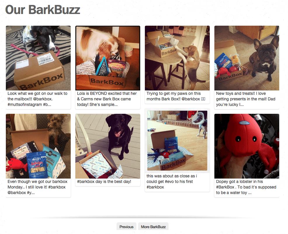 BarkBox auf Instagram - Einsatz von Testimonials und Website Integration